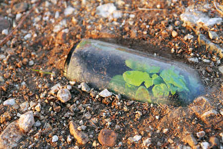 discarded: Plant growing in a discarded, half buried glass bottle. Stock Photo