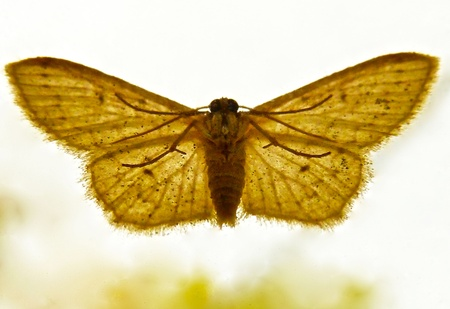 A moth resting on a window. Stock Photo