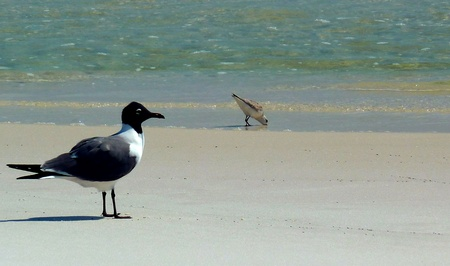 Two sea birds by the seashore.