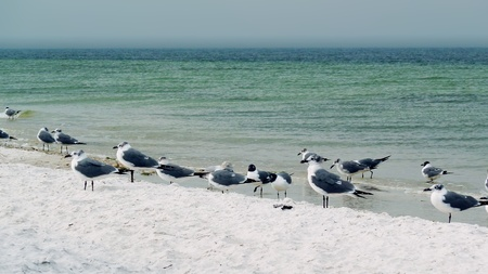 A flock of seagulls playing by the shore.
