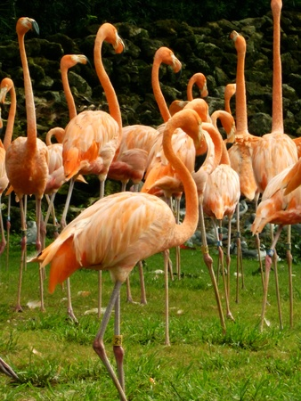 A flock of flamingos in the camera shot. Stock Photo