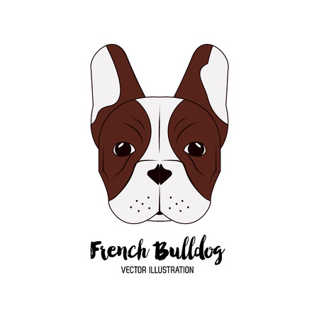 head shot: Dog concept with french bulldog icon design, vector illustration 10 eps graphic. Illustration