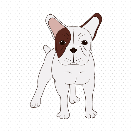 small dog: French bulldog concept with icon design, vector illustration 10 eps graphic. Illustration