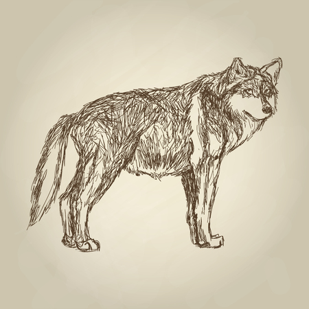 dreadful: Wolf concept with icon design, vector illustration 10 eps graphic. Illustration