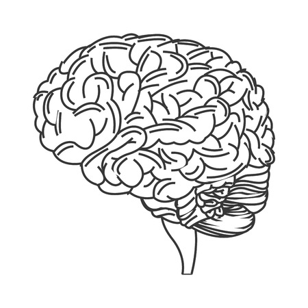 anatomic: line design of human brain icon vector illustration Illustration