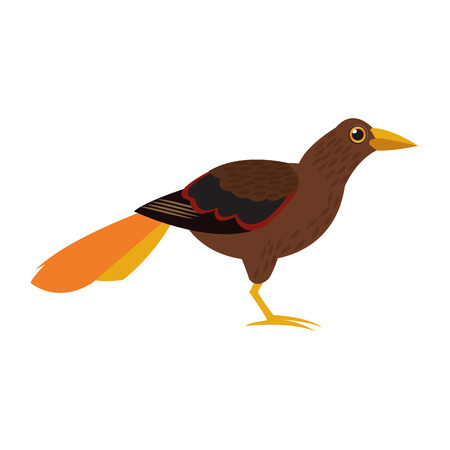 tufted: flat design tropical brown bird icon vector illustration
