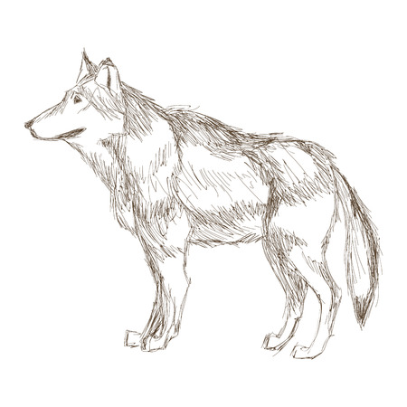 sideview: simple flat design wolf sideview sketch icon vector illustration animal