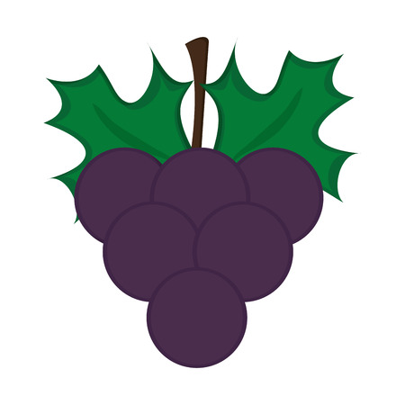 vitis: flat design grape bunch icon vector illustration Illustration
