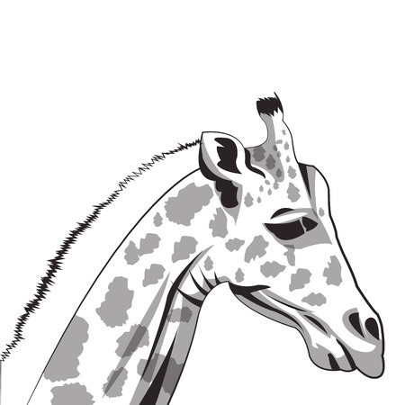 camelopardalis: flat design giraffe drawing icon vector illustration Illustration