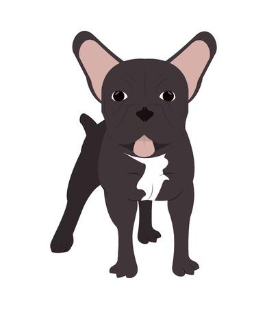 flat design french bulldog icon vector illustration