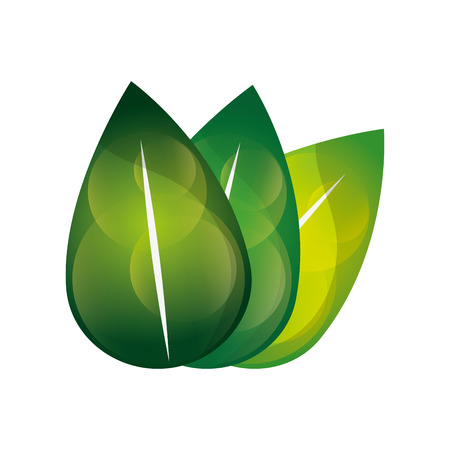vegetate: flat design leaves nature icon vector illustration