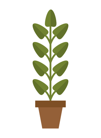 flat design plant in pot icon vector illustration