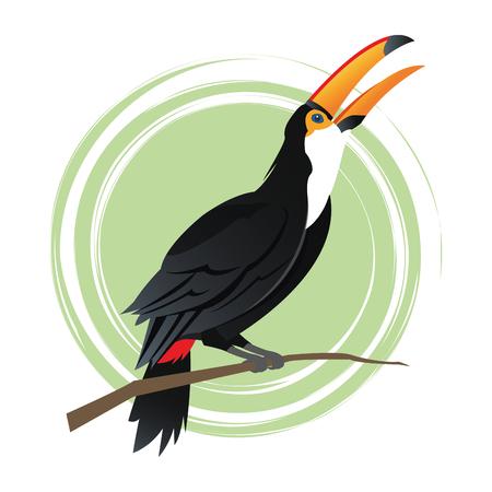 specie: Tuncan cartoon icon. Bird animal nature and specie theme. Colorful design. Vector illustration Illustration
