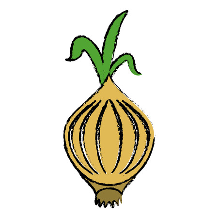 drawing onion vegetable nutrition sprout icon