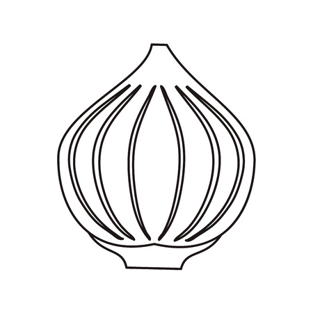 the sprouting: outline onion vegetable spicy natural icon vector illustration