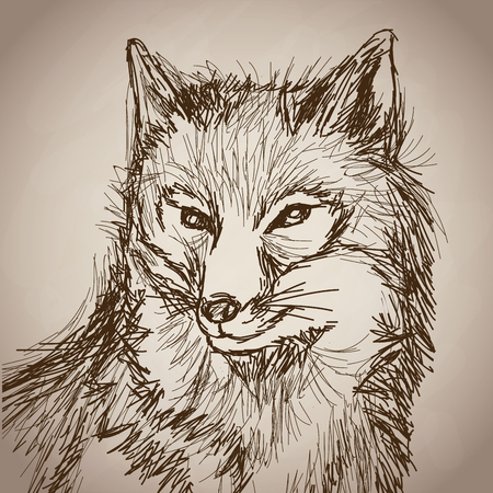 cunning: fox portrait forest hand drawing vintage vector illustration eps 10