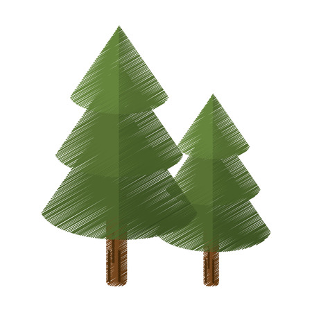 colored canadian evergreen tree pine vector illustration eps 10 Illustration
