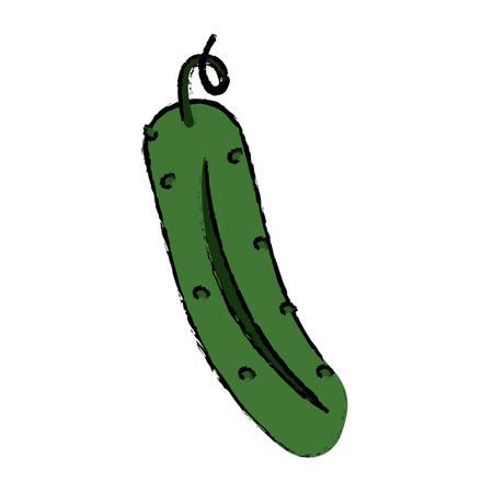 drawing cucumber nutrition vegetable icon vectoe illustration eps 10 Illustration