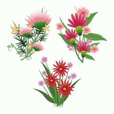 petal: set flowers bunch leaves romance petal vector illustration
