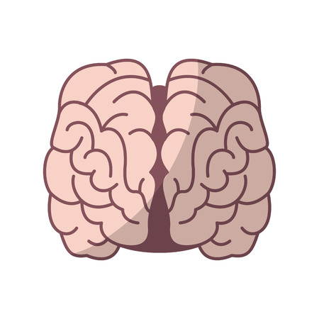 human brain organ icon over white background. colorful design. vector illustration