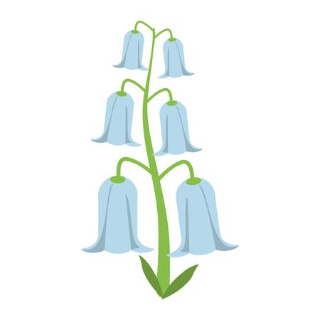 bell flowers flora botany