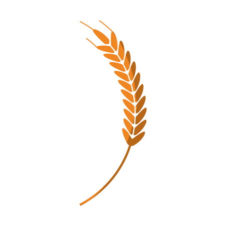 wheat ear icon over white background. colorful design. vector illustration