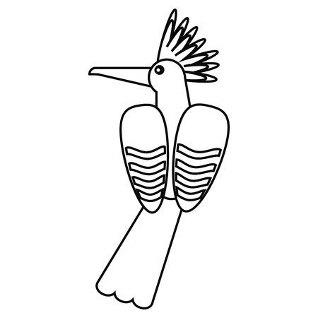hoopoe bird exotic thin line vector illustration eps 10