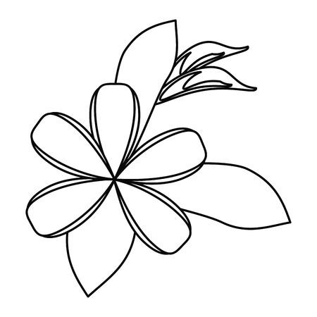 plumeria flower decoration thin line vector illustration