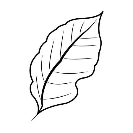 leaf plant icon image vector illustration design Illustration