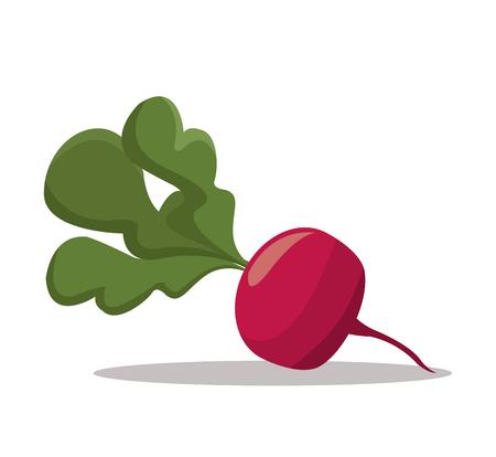 eps 10: radish nutrition healthy image vector illustration eps 10