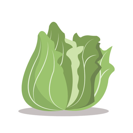 nutritional: lettuce nutrition healthy image vector illustration eps 10