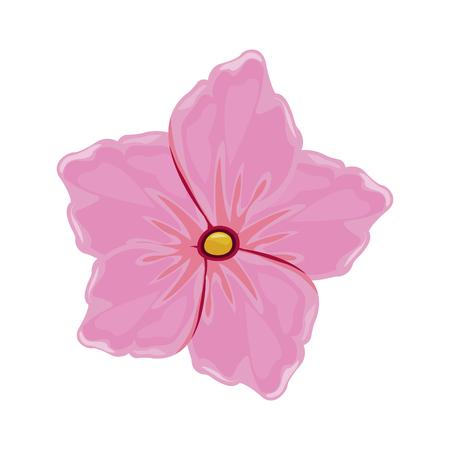 flower geranium florist image vector illustration