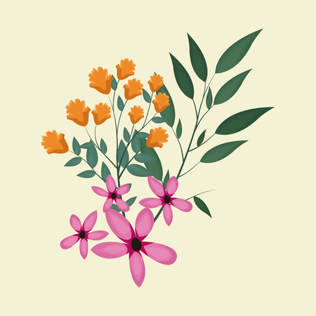 cosmos natural floral decoration vector illustration