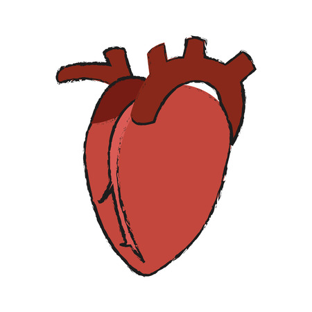 large intestine: human heart organ icon over white background. vector illustration