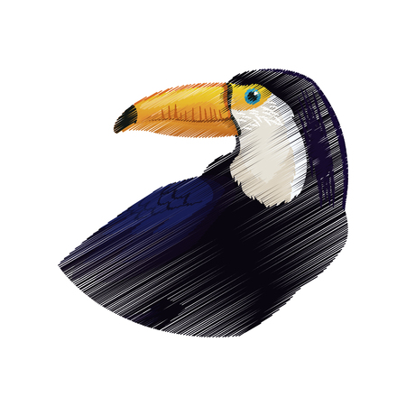 tucan exotic bird icon image vector illustration design Illustration