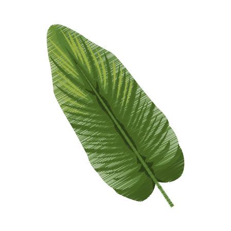 vegetate: tropical leaf icon image vector illustration design Illustration