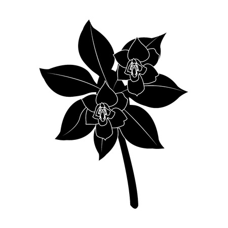 tropical flower icon image vector illustration design