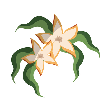 deign: tropical flowers icon over white background. colorful deign. vector illustration Illustration