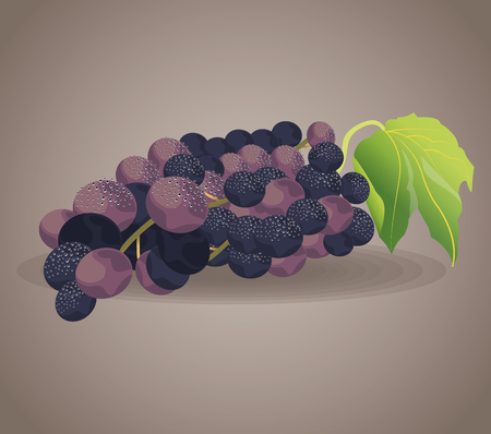 viticulture: grape fruit ingredient wine vector illustration eps 10