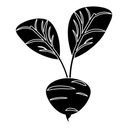 beetroot vegetable food fresh pictogramvector illustration eps 10