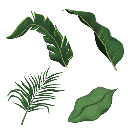 tropical leaves palm tree plant vector illustration eps 10 Illustration