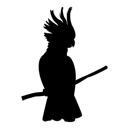 kaketoe tropische vogel pictogram afbeelding vector illustratie ontwerp zwart silhouet