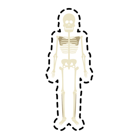 human skeleton icon image vector illustration design