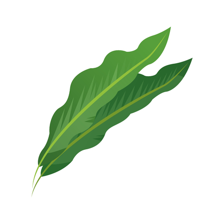 Tropical leaf icon over white background.