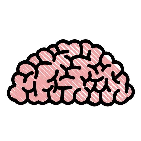 Drawing brain human organ memory vector illustration.