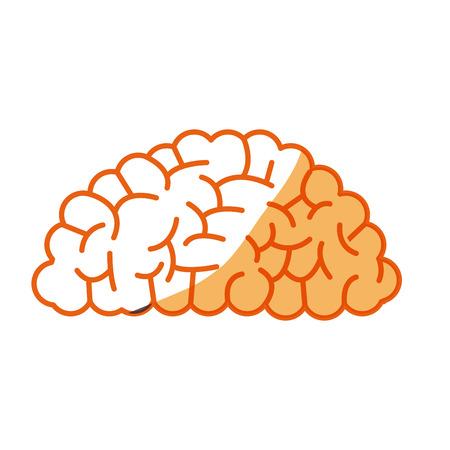 brain human organ memory mind vector illustration Illustration