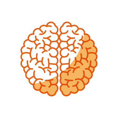 brain human intellect mental knowledge vector illustration