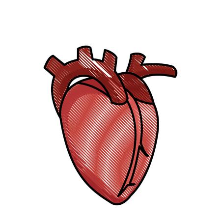 cardioid: drawing heart human organ healthy vector illustration