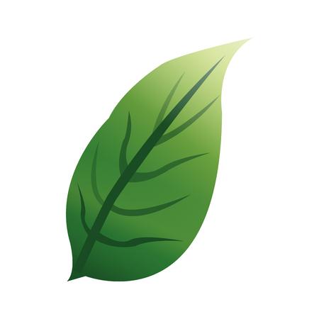 vegetate: green textured leaf icon image vector illustration design