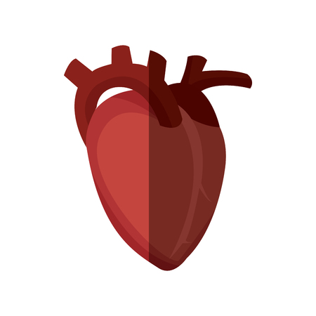 Heart organ healthy design, vector illustration graphic.
